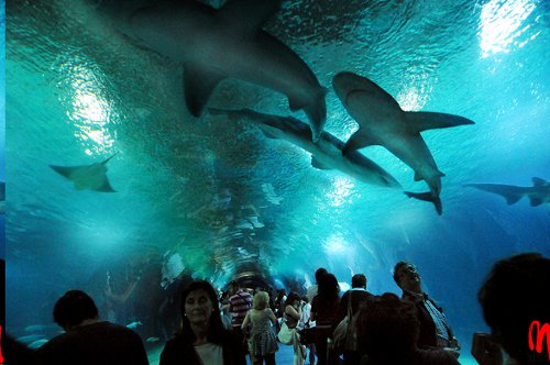 Welcome to that other spanish city highbrow magazine for Aquarium valencia bar
