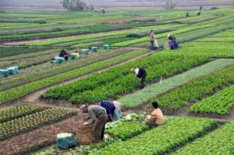 a look at organic agriculture and its contribution to global food production All while the global population and its demand for food continues to skyrocket they decided to take a look at not only how climate-induced changes in agricultural production will affect human food consumption.