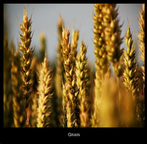 Making Sense of the Debate Over Genetically Modified